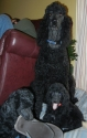 2011 Bob with two of his pups