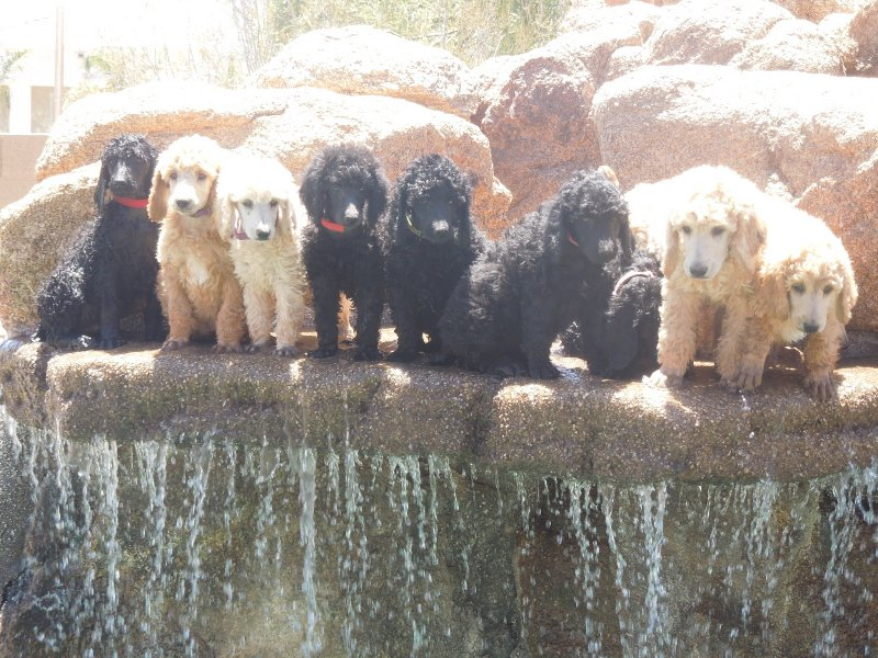 All Pups on the Waterfall 8 Weeks (9)