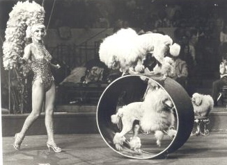 1978 Ringling Brothers and Barnum and Bailey Circus - Miss Anna