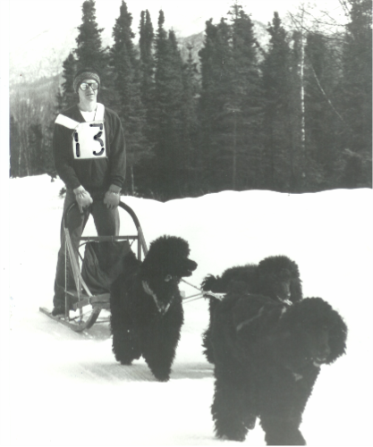 John Suter Alaska 1976 Poodle Sled Dog Team