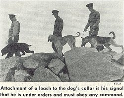 Poodles in WWII www.poodlehistory.org