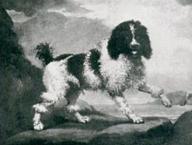 The Poodle - 1600s painting of the Traditional Poodle - Wikipedia